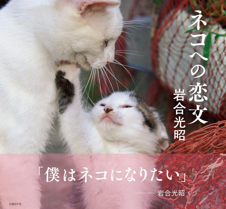 ネコ好きから圧倒的人気の動物写真家、岩合光昭のネコ写真集が最高すぎる