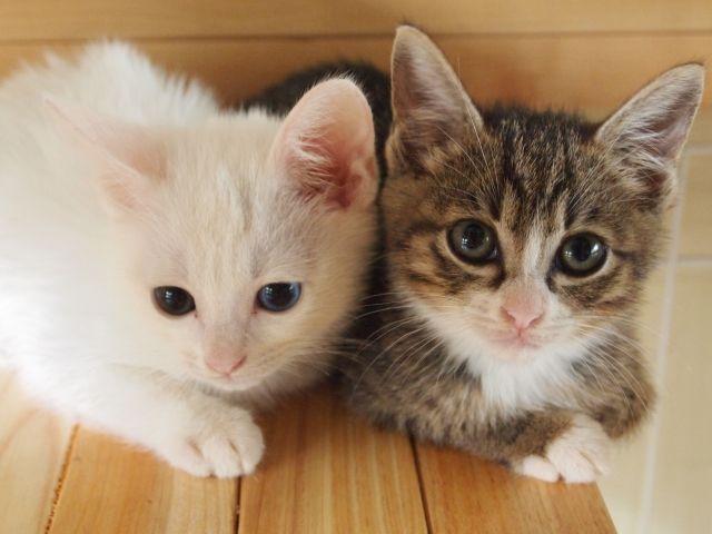 2月22日は「猫の日」 海外でも知られている日本の「猫小説」とは