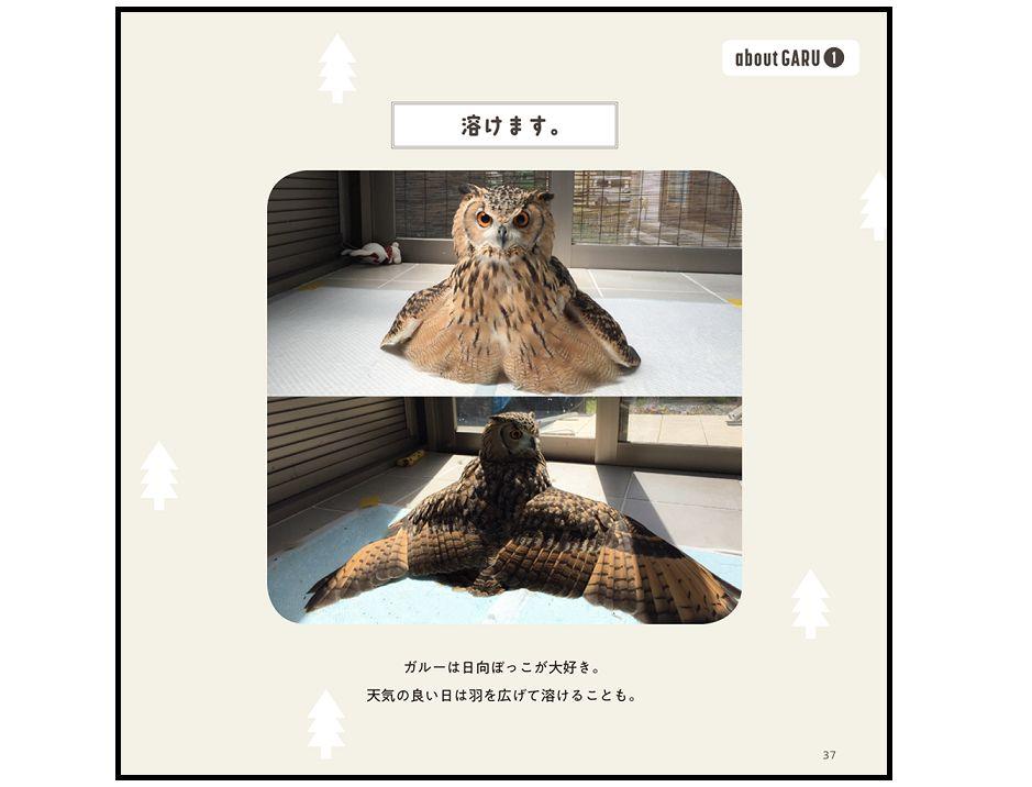 """すでに1000万人が癒された!? """"フクロウ界のアイドル""""が1st写真集をリリース"""